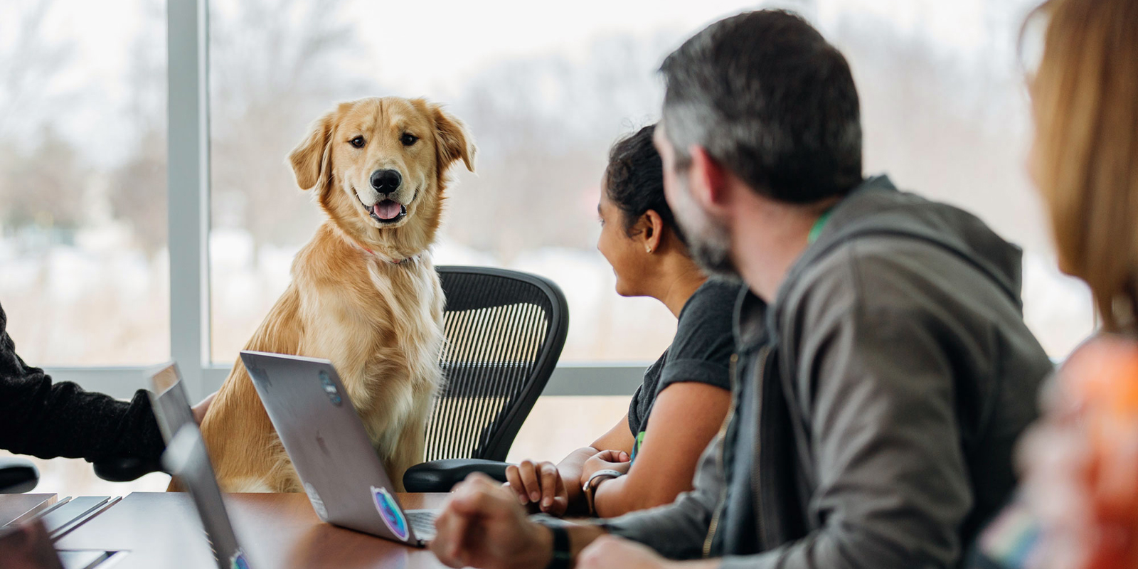 Maximise leads and ROI with digital marketing for vet industry